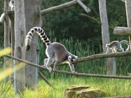 Madagascar4
